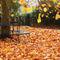 Autumnal-2