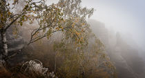Eisiger Nebelherbst von Thomas Mertens