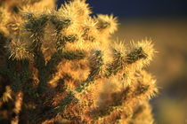 Cactus in Late Afternoon sunlight. by Brian  Leng