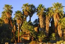 29 Palms, California, USA Desert  von Brian  Leng
