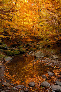 Autumn tale von Danislav Mironov