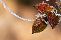 icy thread by Danislav Mironov