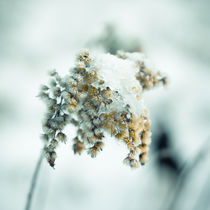 Frost & beauty by Lina Gavenaite
