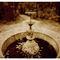 Secret-garden-img-9342-artflakes