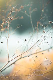 Frost & beauty by Lina Gavenaite
