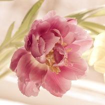Tulip blossom by Lina Gavenaite