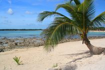 Traumhafter Strand mit Palme an der Karibikküste by Marita Zacharias