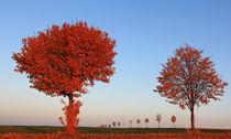 Herbst im Abendlicht von Wolfgang Dufner