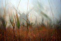 Im Nebel von Christian Stein