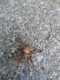 Orange-spider-01