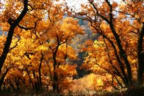 Herbstfeuer by rheo