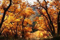 Herbstfeuer von rheo