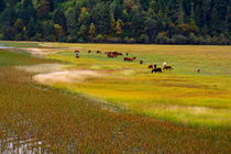 Colorful Meadow (Shangeri-La, YunNan, China) by ShuiZhou He