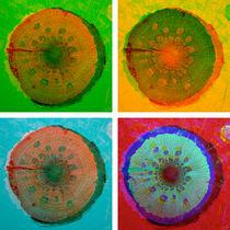 PilzHolz Collage 1-4 by Marko Köppe