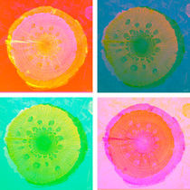 PilzHolz Collage 5-8 by Marko Köppe