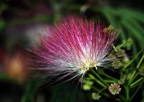 Deep-pink-flower