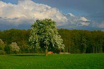 Frühling im Soonwald by rheo