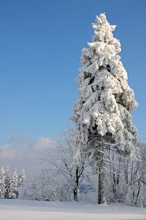 Winterwald von Wolfgang Dufner