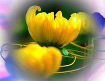 Chrysanthemum by Maks Erlikh