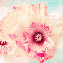 Pastell poppy by AD DESIGN Photo + PhotoArt