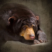Sad Sun Bear by Louise Heusinkveld