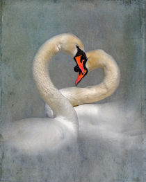 Romantic Swans by Louise Heusinkveld