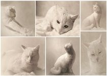 Katzencollage by Christine Lamade