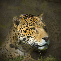 Leopard Portrait by Betty LaRue
