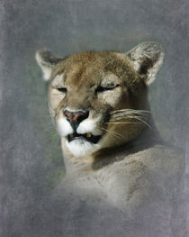 North American Cougar 2 by Betty LaRue