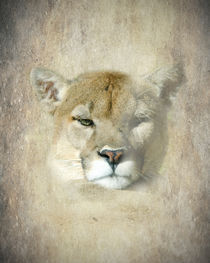 The Eye of the Mountain Lion by Betty LaRue