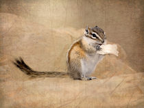 Least Chipmunk Eating Bread by Betty LaRue