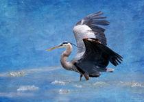 Great Blue Heron Fishing von Betty LaRue