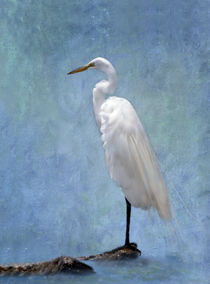 Great Egret on a Rock von Betty LaRue