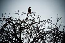 Bird's Eye View by Yvonne Hamilton