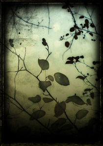 Through a Glass Darkly by Sybille Sterk