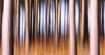 Deep in the Forest von Anne Staub