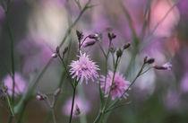 Spring von Anne Staub