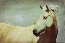 Horse portrait by Anne Staub