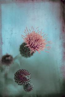 Pastel pink von Anne Staub