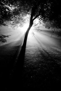 Light Through the Fog by Kellen Witschen