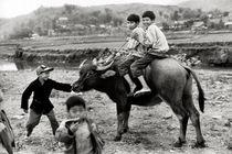 Bufalo-ride