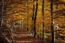 Herbstwald von Andreas Levi
