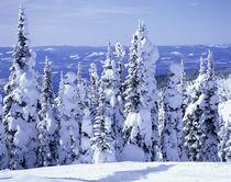 'landscape Montana USA' von Okapia