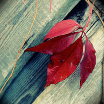 red leaf von tr-design
