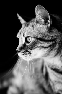 Cat-waiting-b-w