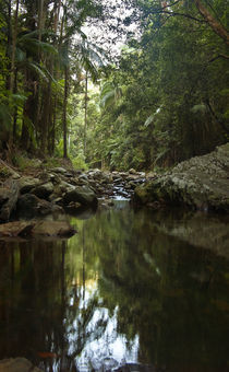 A Pool in the Forest by photography-by-odille