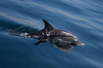 Dolphin Magic by photography-by-odille