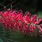 St-mary-falls-pink-bbrush-2008-8924