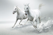 White horses  by Tanja Krstevska