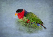 Black-capped Lory by Betty LaRue